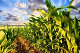 agricultura Moldovei