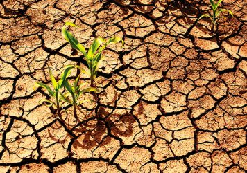 seceta-agricultura-356x250.jpg
